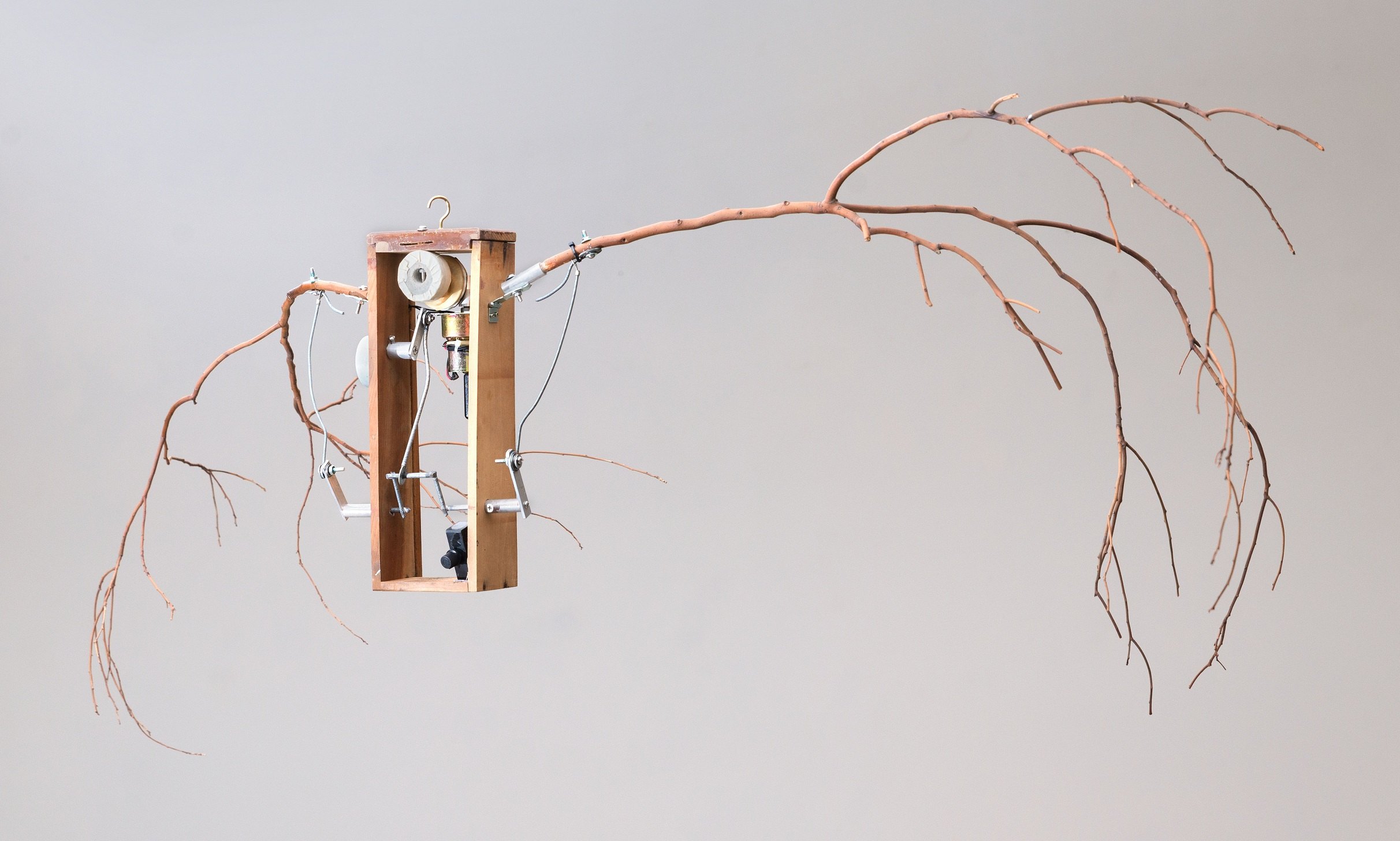Jungle Voice - the Bird|40×165×8 cm|2015|Branch, Wood Box, Motor